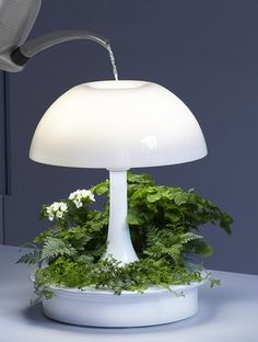 Get this lamp designed to grow plants that light up your life.