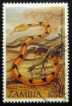 Tiger Snake Zambia Framed Postage Stamp Art by PassionGiftStampArt