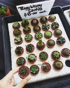 (at Queen Victoria Markets) Cacti And Succulents, Planting Succulents, Cactus Plants, Planting Flowers, Tiny Cactus, Plant Aesthetic, Flower Aesthetic, Plants Are Friends, Cactus Y Suculentas