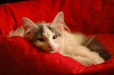 Ausgeschlafen http://fc-foto.de/18004823