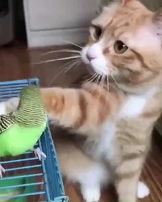 The cat won't hurt bird❤️ - Tiere - Gatos Cute Funny Animals, Cute Baby Animals, Funny Cats, Cats Humor, Funny Horses, Cute Animal Videos, Funny Animal Pictures, Cute Kitten Videos, Cute Cats And Kittens