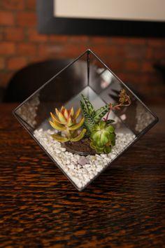 Urban Botanist Terrariums At U0027Portal To The Urban Gin Gardenu0027.