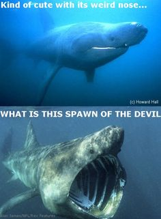 what happened when i discovered basking sharks today