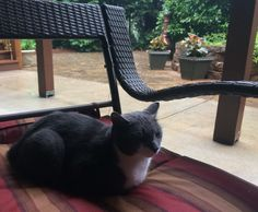Loafing outside on a rainy Friday