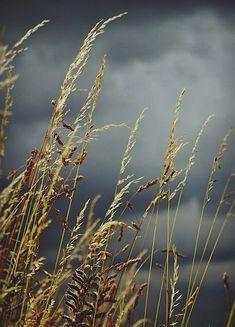 Oír llover en verano; uno de los grandes placeres de la vida.