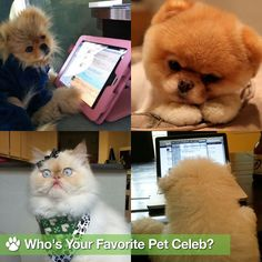 Photos Of Dogs Latest News, Photos and Videos | POPSUGAR Pets