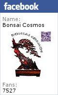 Bonsai cosmos