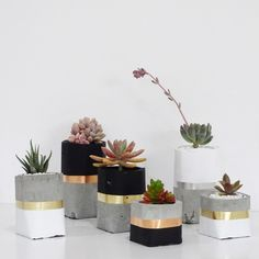 Concrete pots with black and gold.