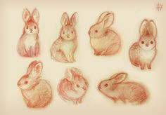 Some exploration sketches of Pygmy Rabbits for a project with Denae! Hoping to post more of it soon :D