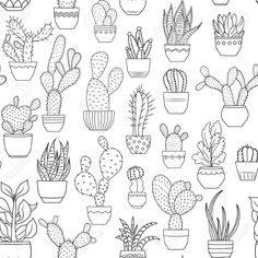 Image result for succulent line drawing
