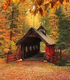 dreaming of covered bridges and that this fall foliage won't end ❤️🍂📸: @snaphappymichigan