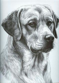 The Secrets Of Drawing Realistic Pencil Portraits - (pencil drawing) Secrets Of Drawing Realistic Pencil Portraits - Discover The Secrets Of Drawing Realistic Pencil Portraits Animal Sketches, Animal Drawings, Pencil Drawings, Art Sketches, Dog Pencil Drawing, Drawing Animals, Amazing Drawings, Realistic Drawings, Cool Drawings