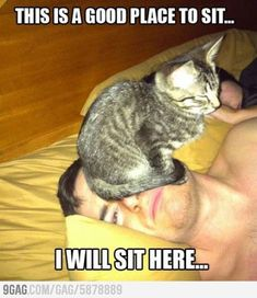 """""""Those of us with cats understand."""" those of us with 85 lb boxers also understand."""