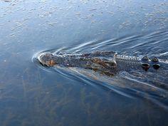 Zim woman killed by crocodile as friends watch - Latest ZIMBABWE NEWS Online Today |Zim Latest News|ZIM NEWS|www. Zimbabwenews .co.zw|Current Situation in Pictures