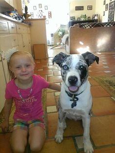 Australian Shepherd And Pit Bull Mix Love It Pitbull Mix Puppies Dogs Puppies Pit Puppies