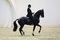 Phillips Karl and High Noon... classical dressage, true art and true dressage.