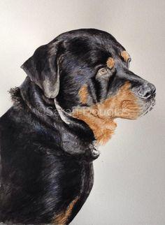 Pet portrait of rottweiler in watercolour by Sarah Douglas