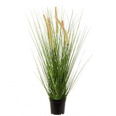 Intratuin kunstplant Pennisetum D 32 H 60 cm Herbs, Food, Products, Herb, Meals, Yemek, Beauty Products, Eten