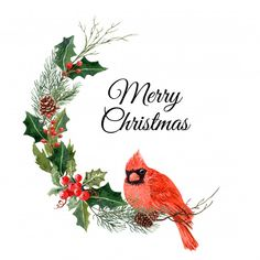 Watercolor bird Christmas with pine tree and holly. Christmas Wishes Words, Christmas Bird, Christmas Clipart, Christmas Images, Christmas Printables, Christmas Holidays, Christmas Wreaths, Christmas Crafts, Xmas Drawing