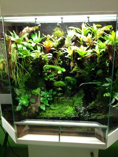 Dutch Rana viv at the dutch KikkerDag 2015 Terrariums, Gecko Terrarium, Terrarium Reptile, Rabbit Cages, Planted Aquarium, Aquascaping, Snake Enclosure, Goldfish Tank, Planting
