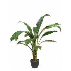 Planta helecho artificial asplenium