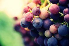 Grapes by Marjobsoleta.deviantart.com on @DeviantArt