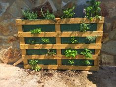 1000 images about pallet on pinterest pallets garden for Jardin vertical con palets