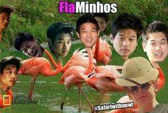 The maze runner - FlaMinhos #Safariwithnewt :'DD
