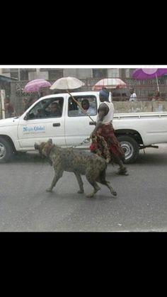 Wtf.. That's a Hyena