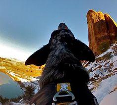 DOG FRIENDLY ROAD TRIP DESTINATIONS