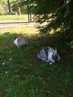 Wilde konijn hebben hun vrijheid!