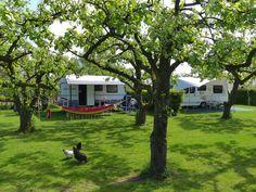 Camping Life, Westies, Happy Campers, Dexter, Trekking, Travelling, Road Trip, Vacation, Park