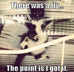 There was a fly.. LOL