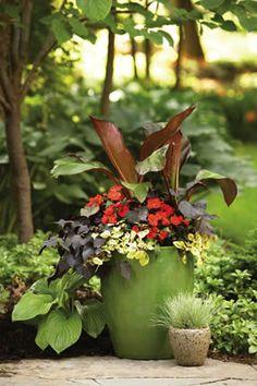 Red Banna, Black Heart Sweet Potato Vine, Infinity Scarlet New Guinea Impatiens, Troys Gold Piectrnthus