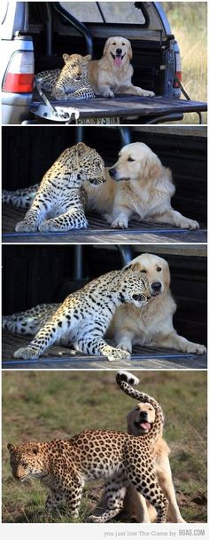 Interspecies love!!!  It just makes everything better.