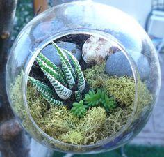 Hanging Succulent Terrarium Succulent Terrarium by BellasJardin, $21.00