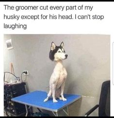 This poor dog. Lol This poor dog. Humor Animal, Funny Animal Jokes, Funny Dog Memes, Crazy Funny Memes, Really Funny Memes, Animal Quotes, Cute Funny Animals, Funny Relatable Memes, Funny Cute