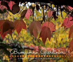 l'agenda del giardino e del giardiniere (14 - 20 novembre) ~ un giardino in diretta - blog di giardini, giardinaggio, natura e di artigianato