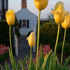 Spring gardens on #mossmountainfarm #joy #tulips #gardenhome #pallensharethebounty #gardenchat