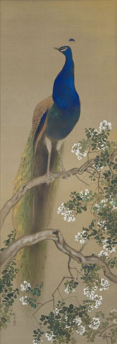 rephotographed Oukoku KONOSHIMA's work in the posession of Oukoku-Bunko Peacock Painting, Peacock Art, Japanese Art Styles, Japanese Painting, Irezumi, Japan Art, Illustration Art, Creatures, Fine Art