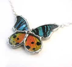 Real Butterfly Jewelry Madagascan Sunset Moth Necklace  by neile