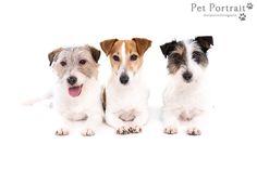 Hondenfotografie Hillegom - Rashondendag 3 - 2 februari 2014-16