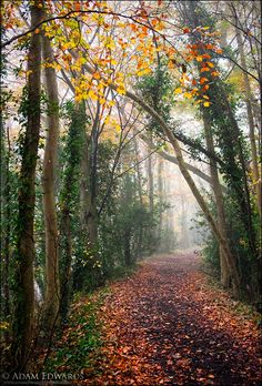 Path in the woods (no location given) by Adam Edwards cr.