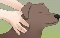 Met deze tip help jij je hond gezonder te worden! Het klinkt misschien een beetje gek, je hond masseren, maar het kan heel erg...