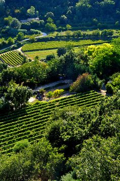 Le Luberon, Provence -- Can you imagine when everyone has their own vineyard, their own fruit trees as God has promised? there is no more sickness, no more hatred, racism is gone, and mankind is at peace. No more funerals. No we can barely imagine it. It is God's SWORN promise.              See  jw.org