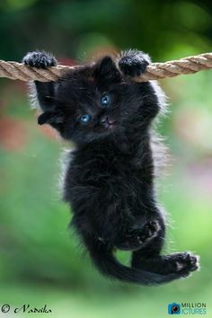 black kitty with blue eyes - so cute ♥♥♥♥ #cat