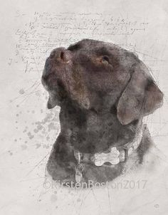 Chocolate Labrador Retriever Sketch, Kirsten Boston, Giclée, Print, Dog Print, Watercolour, Digital Art, ArtHangar, A5, A4, A3