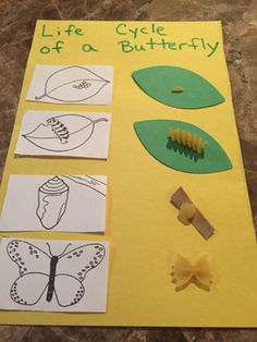 Pasta Life Cycle of a Butterfly Craft Using pasta, children create a life cycle of a butterfly chart. Glue illustrations of the 4 stages of a butterfly on the left side of a paper and then the corresponding pasta pieces directly next to them. It's a cute activity that really gives the children an understanding of how a caterpillar changes into a butterfly. What you'll need: Yellow construction paper, cut in half Green construction paper Scrap of brown paper for twig Glue, scissors and m...