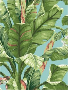 wallpaperstogo.com WTG-143171 Ashford House Tropical Wallpaper