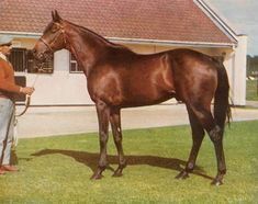 Mill Reef (USA) 1968-1986 (Never Bend-Milan Lady - Princequillo) Owner: Paul Mellon: USA; Trainer: Ian Balding; UK. European Horse of the Year and Classics winner. A favorite that I followed during his career and to stud where I met him in Newmarket standing at the National Stud. I remember being impressed how small he was yet had a huge heart.